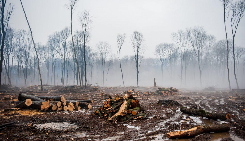 Negen redenen waarom biomassa een heel slecht idee is